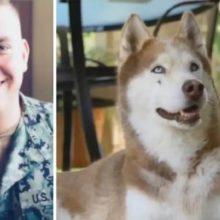 7 anos depois que cão do soldado sumiu, ele aparece na sua porta