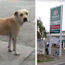Cachorro abandonado é adotado por posto de gasolina e salva frentista de assalto