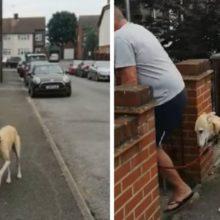 Cachorro começa a imitar o seu tutor depois que ele quebrou o tornozelo