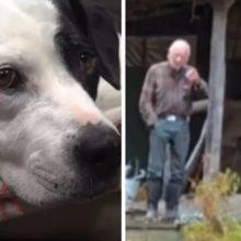 Cachorro corre até um policial que está fora de serviço e implora que ele o siga de volta à floresta