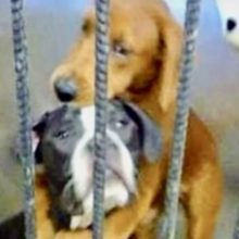 Cachorro de abrigo é salvo horas antes da eutanásia por seu melhor amigo abraçando-o