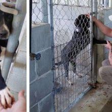 Cachorro de um abrigo dá a pata para pessoas que passam na sua frente