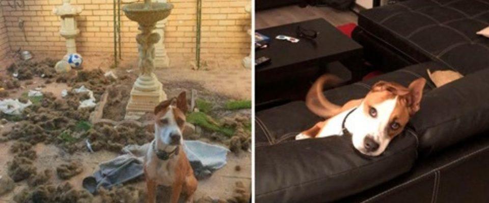 Cachorro destruiu o quintal da nova namorada do seu tutor: 'Eu queria provar o relacionamento'