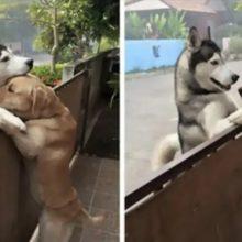 Cachorro estava sozinho, então ele fez amizade e abraçou o seu melhor amigo