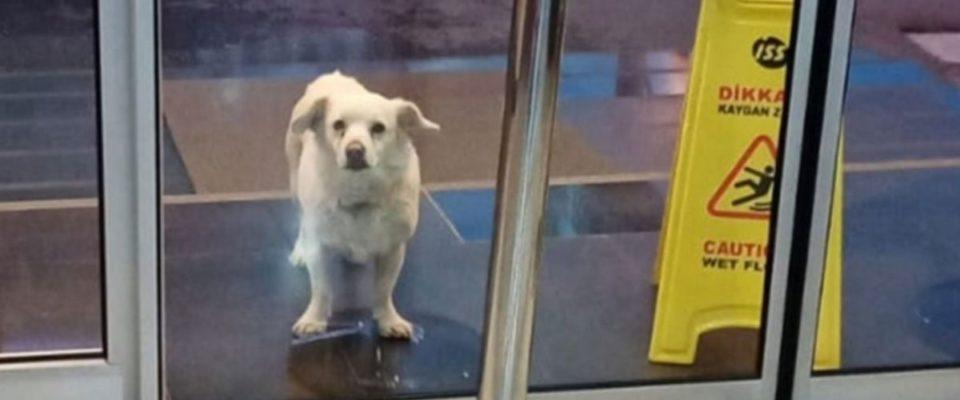 Cachorro leal espera seis dias fora do hospital por seu dono doente