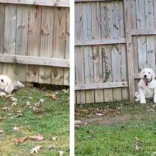 Cachorro não deixou que a cerca o impeça de conhecer seu novo vizinho