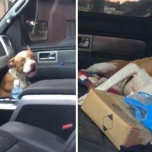 Cachorro perdido pulou dentro de um carro e não saiu até ser adotado