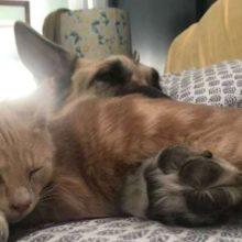 Cachorro vê um gato adotável e se apaixona por ele e faz seus tutores adotarem ele