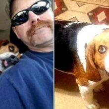 Cão de abrigo agradecido, não consegue parar de acariciar seu tutor a caminho da sua nova casa