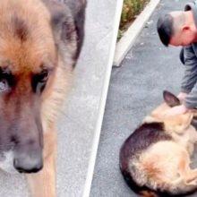 """Cão policial aposentado """"chora"""" depois de ser reunido com o treinador"""