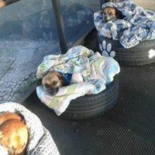 Estação de ônibus abre portas para cães de rua dormirem confortavelmente