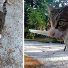Gatinha sorrateira rouba coisas dos vizinhos e é desmascarada