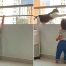 Gatinho encanta a todos cuidando de um garotinho que não o deixa subir na janela