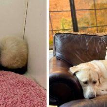 Gatinho mal-humorado de um abrigo se transforma com a ajuda de um cachorro gigante