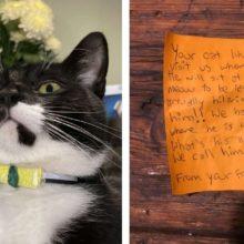 Gato chega na sua casa com bilhete na coleira após uma aventura pela vizinhança