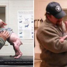 Homem volta para adotar o cachorro que salvou, e o filhote não poderia ficar mais feliz