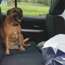 Mulher deixa a porta do carro aberta e encontra um cachorro fofo dentro