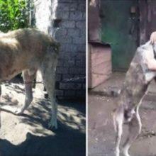 Mulher fica emocionada ao ver seu cachorro que foi roubado 2 anos atrás
