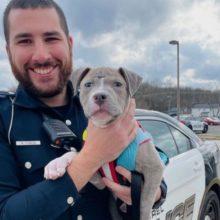 Policial adota cachorro de rua ferido que ele resgatou durante o serviço