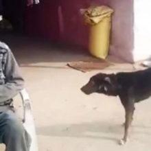 Senhor decepcionado com seus filhos quer deixar metade da sua herança para seu cachorro