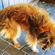 Cachorro chamado de feio é adotado e passa por uma bela transformação