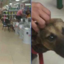 Cachorro de rua é adotado por loja e vira recepcionista, você vai amar ver
