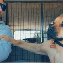 Cachorro resgatado se recusa a tirar a pata do seu pai humano