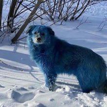 Cachorros misteriosamente estão ficando azul e rosa na cidade Russa