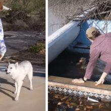 Cães abandonados pedem ajuda a dois jovem para salvar amigo que estava se afogando