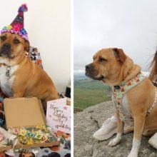 Cão com doença terminal é adotado e seus tutores proporcionam os melhores dias da sua vida