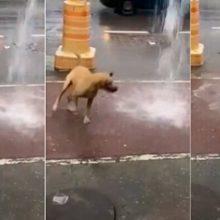 Cão vira-lata se diverte embaixo de cascata d' água e diverte a internet