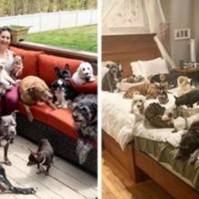 Casal gasta 290 mil reais para customizar casa para dar qualidade de vida para 20 cães idosos e com necessidades especiais