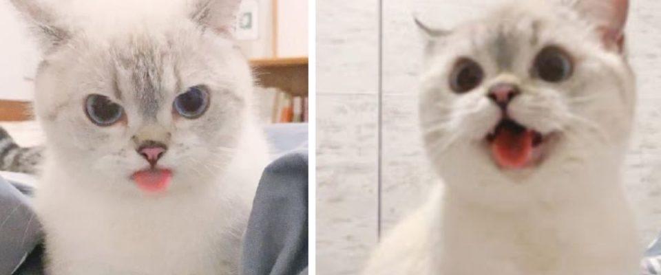 Conheça Nana, a gatinha com as expressões mais fofas do mundo
