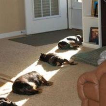 Estes 10 animais movidos a energia solar estão quase totalmente carregados