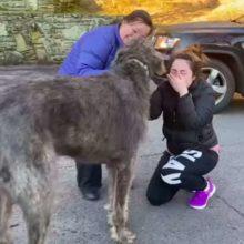 Garota não consegue parar de chorar quando vê o cachorro que pensou que tinha perdido para sempre