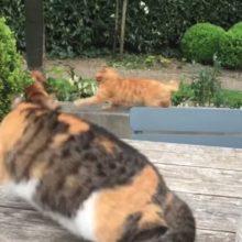Gato protege seu amigo cachorro de um ataque de um bichano malvado