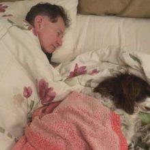 Homem dorme no sofá com seu cachorro idoso para fazer companhia