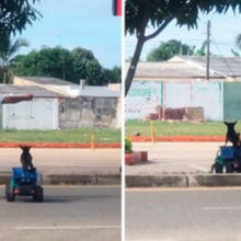 Encantador! Homem leva seu cãozinho para passear em um carrinho de brinquedo