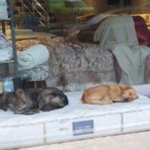 Loja de móveis sempre garante que os cães de rua tenham um lugar aconchegante para dormir