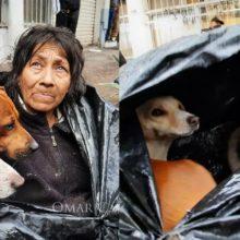 Mulher faz barraca improvisada com sacos plásticos para proteger ela e seus cães