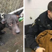 Policial adota cachorro abandonado que resgatou na chuva