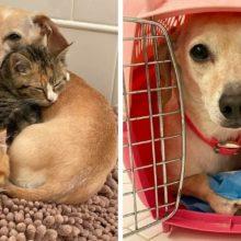Cachorrinha cuida de gatinhos até que eles tenham coragem de interagir com as pessoas
