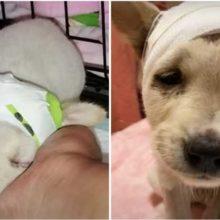 Cachorrinho de rua com crânio quebrado luta contra todas as probabilidades para poder viver