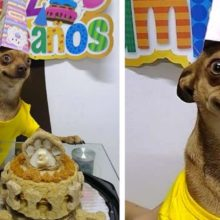 Cachorro fica muito feliz com sua família que lembraram do seu aniversário