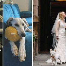 Cachorro leva aliança para sua humana que o salvou da porta da morte