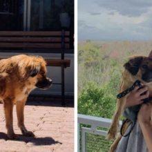 Cachorro nascido com espinha super curta é adotado e tem uma vida feliz