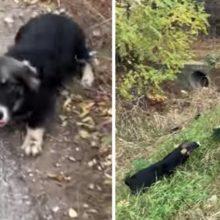 Cão abandonado cheio de tristeza fica mais feliz do que nunca quando foi resgatado