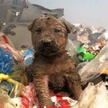 Cão abandonado em um lixão encontra uma família amorosa que ele merece