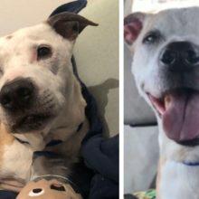 Cão de abrigo de 16 anos não consegue parar de sorrir durante todo o trajeto para seu novo lar
