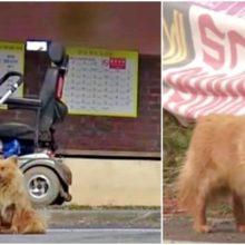 Cão espera todos os dias no ponto de ônibus pela senhora que salvou sua vida depois de ser abandonado